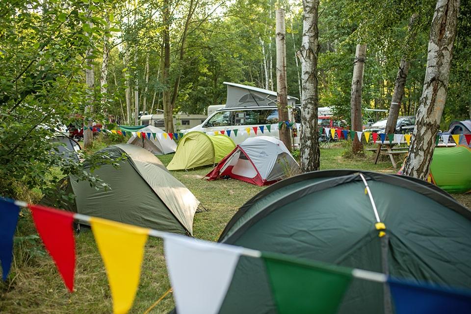 Zwischen Birken und Buchen - Camping in der grünen Oase!